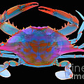 Blue Crab, X-ray by Ted Kinsman