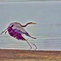 Blue Heron by Douglas Barnard