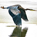 Blue Heron by Norman Hall