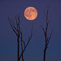 Blue Moon by Raymond Salani III