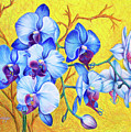 Blue Orchids #2 by Nancy Cupp