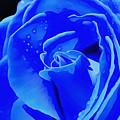 Blue Romance by Krissy Katsimbras