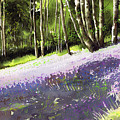 Bluebell Wood by Paul Dene Marlor