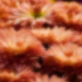 Blurred Seasonal Flowers With Yellow Background by Rudra Narayan  Mitra