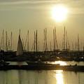Boat Docks  by Trisha Dahm
