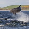 Bottlenose Dolphin - Scotland  #14 by Karen Van Der Zijden