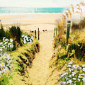 Path To The Beach by Clive Littin