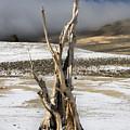 Bristlecone Fog And Sierra Nevada 1 by Bob Neiman