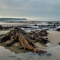 Bronze Age Sunken Forest At Borth On The West Wales Coast Uk by Keith Morris