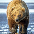 Brown Bear by Jack Bell