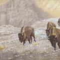 Buffalo Under The Alpenglow by Sharon Karlson