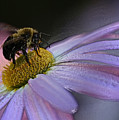 Bumble Bee On Flower by Ronnie Corn