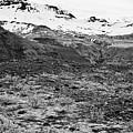 bushes and mosses growing on Skaftafell glacier end moraine Vatnajokull national park in Iceland by Joe Fox