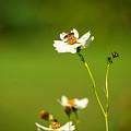Busy Bee by Mark Llewellyn