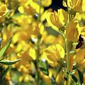 Busy Bee by Rosalyn Zacha