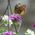 Butterflies Are Free by Barbara S Nickerson