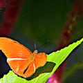 Butterfly 22 by Walter Herrit