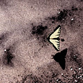 Butterfly And Sand Wc by Lyle Crump
