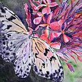 Butterfly Enchantment by Corynne Hilbert
