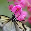Butterfly Garden by Heather Fiedler