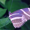 Butterfly by Jerry McElroy