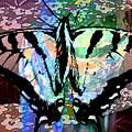Butterfly Pet by Elaine Berger