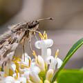 Butterfly by Valerio Poccobelli