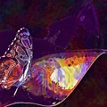 Butterfly Wings Insect Nature  by PixBreak Art