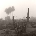 Cactus Fog by Heather Kirk