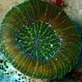 Cactus Ring Coral by Nina Banks