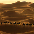 Camel Caravan In The Erg Chebbi Southern Morocco by Ralph A  Ledergerber-Photography