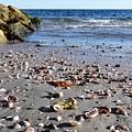 Cape Cod Beach Finds by Gina Sullivan