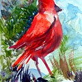Cardinal by Mindy Newman