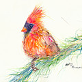 Cardinal On Branch by Beverly Bronson