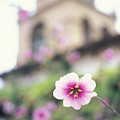 Carmel Mission With Flowers by Kathy Yates