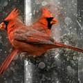 Cary Carolina Cardinals  by Betsy Knapp