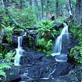 Cascade Creek And Ferns  by Joe  Palermo