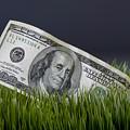 Cash In The Grass. by W Scott McGill