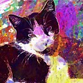 Cat Feline Pet Animal Cute  by PixBreak Art