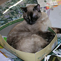Cat In A Box by Carolyn Donnell