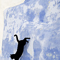 Cat Jumping From A Wall by Jean-Louis Klein & Marie-Luce Hubert