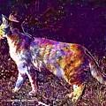 Cat Kitten Breed Cat Mackerel  by PixBreak Art