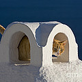 Cat On A Roof, Greece by Jean-Louis Klein & Marie-Luce Hubert