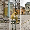 Cat by Svetlana Batalina