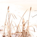 Cattails by Creations by Shaunna Lynn