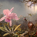 Cattleya Orchid And Three Hummingbirds by Martin Johnson Heade