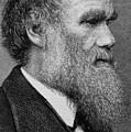 Charles Darwin by English School