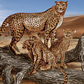 Cheetah Family Tree by Peter Piatt
