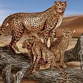 Cheetah Family Tree by Peter Piatt