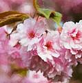 Cherry Blossom by Charmaine Zoe
